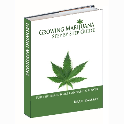 Growing Marijuana Step by Step Guide